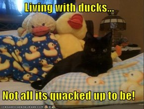 Living with ducks...  Not all its quacked up to be!