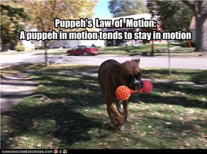 Puppeh's  Law  of  Motion: A puppeh in motion tends to stay in motion