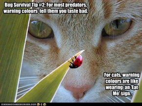 Bug Survival Tip #2: For most predators, warning colours  tell them you taste bad.