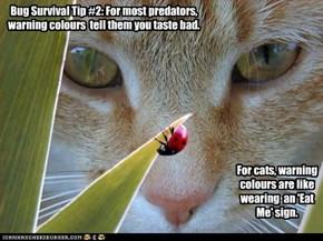 Bug Survival Tip #2: For most predators, warning colours  tell them you taste bad.