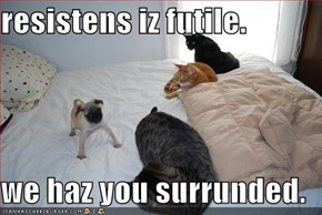 resistens iz futile.  we haz you surrunded.