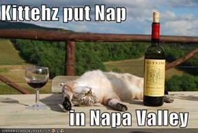 Kittehz put Nap  in Napa Valley