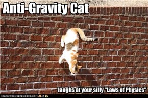 Anti-Gravity Cat