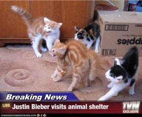 Breaking News - Justin Bieber visits animal shelter