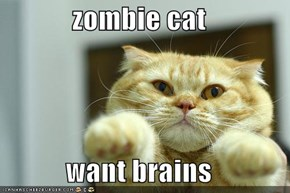 zombie cat   want brains