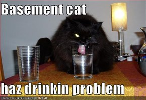 Basement cat  haz drinkin problem