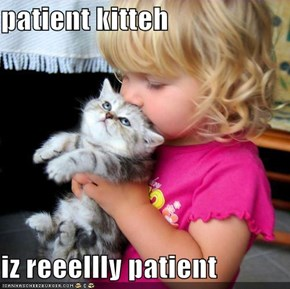 patient kitteh  iz reeellly patient