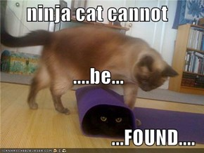 ninja cat cannot  ....be... ...FOUND....