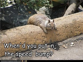 When'd you put in the speed  bump?