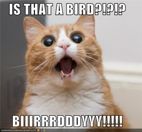 IS THAT A BIRD?!?!?  BIIIRRRDDDYYY!!!!!
