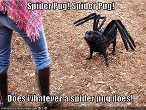 Spider Pug! Spider Pug!  Does whatever a spider pug does!