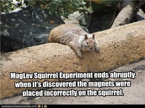 MagLev Squirrel Experiment ends abruptly when it's discovered the magnets were placed incorrectly on the squirrel.