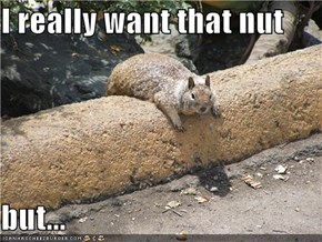 I really want that nut  but...