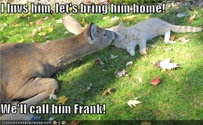 I luvs him, let's bring him home!  We'll call him Frank!