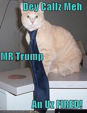 Dey Callz Meh MR Trump  An Uz FIRED!