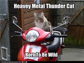 Heavey Metal Thunder Cat