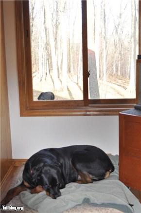 Watchdog sleepin' on the job