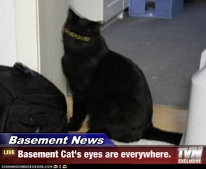Basement News - Basement Cat's eyes are everywhere.