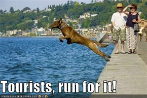 Tourists, run for it!