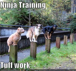 Ninja Training  Tuff work