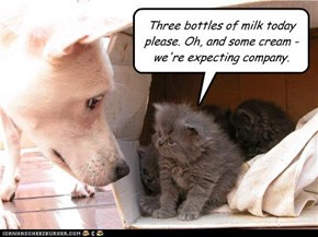 The milkman always barks twice
