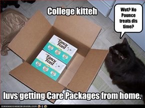 College kitteh        luvs getting Care Packages from home.