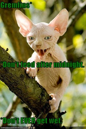 Gremlins* *Don't feed after midnight. *Don't EVER get wet.