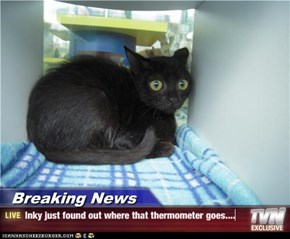 Breaking News - Inky just found out where that thermometer goes....