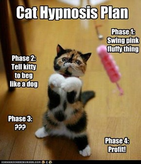 Cat Hypnosis Plan
