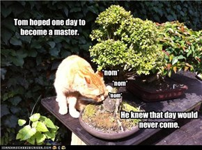 Bonsai Master In Training... not going so well, akshually