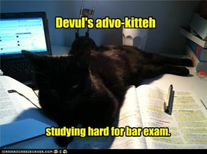 Devul's advo-kitteh