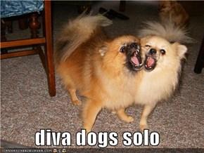 diva dogs solo