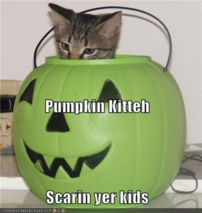 Pumpkin Kitteh Scarin yer kids