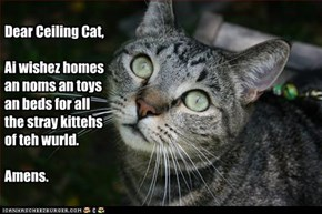 Dear Ceiling Cat,  Ai wishez homes an noms an toys an beds for all the stray kittehs of teh wurld.  Amens.