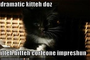 dramatic kitteh doz  itteh bitteh corleone impreshun