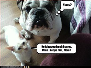 He fahwooed meh homes. Cans I keeps him,  Mom?