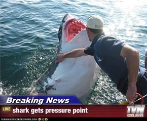 Breaking News - shark gets pressure point