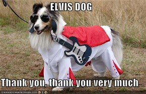 ELVIS DOG  Thank you, thank you very much