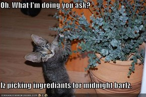 Oh, What I'm doing you ask?  Iz picking ingrediants for midnight barfz.