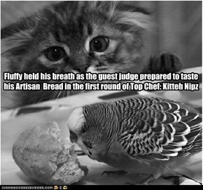 Fluffy held his breath as the guest judge prepared to taste his Artisan  Bread in the first round of Top Chef: Kitteh Nipz