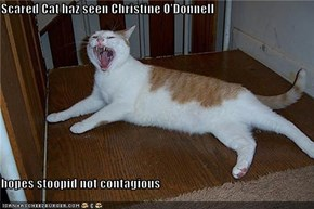 Scared Cat haz seen Christine O'Donnell  hopes stoopid not contagious