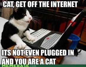 catgetoff.jpg