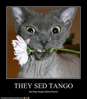 THEY SED TANGO