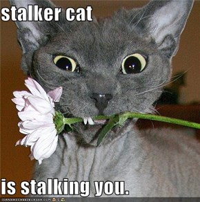 stalker cat  is stalking you.