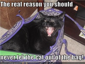The real reason you should  never let the cat out of the bag!