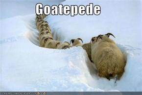 Goatepede