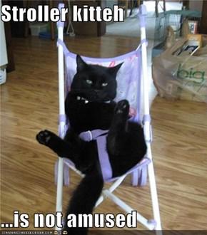 Stroller kitteh  ...is not amused