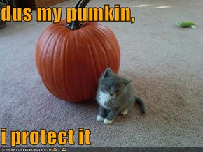 dus my pumkin,  i protect it