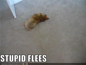 STUPID FLEES