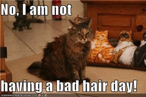 No, I am not  having a bad hair day!